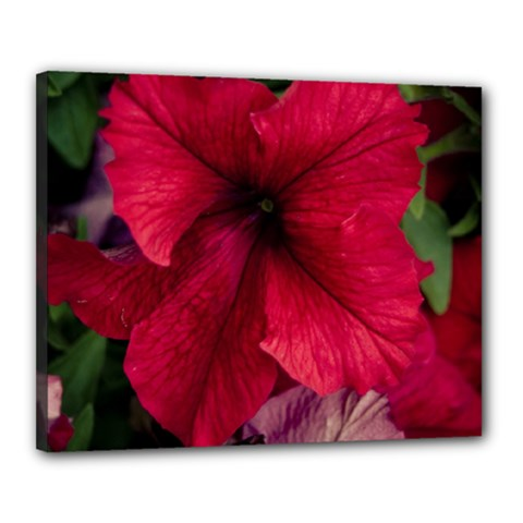 Red Peonies 16  x 20  Framed Canvas Print
