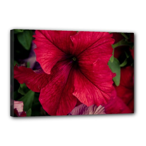 Red Peonies 12  X 18  Framed Canvas Print