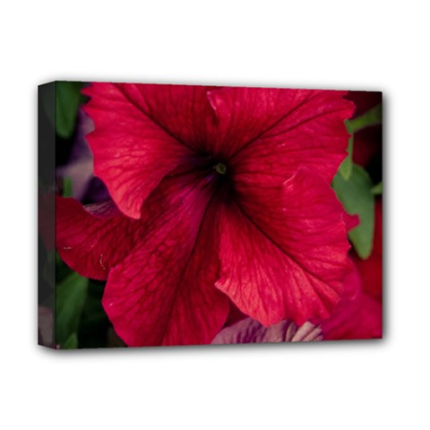 Red Peonies Deluxe Canvas 16  x 12  (Stretched)