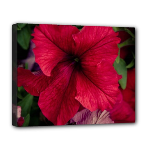 Red Peonies Deluxe Canvas 20  X 16  (stretched)