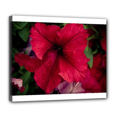 Red Peonies Deluxe Canvas 24  X 20  (stretched)