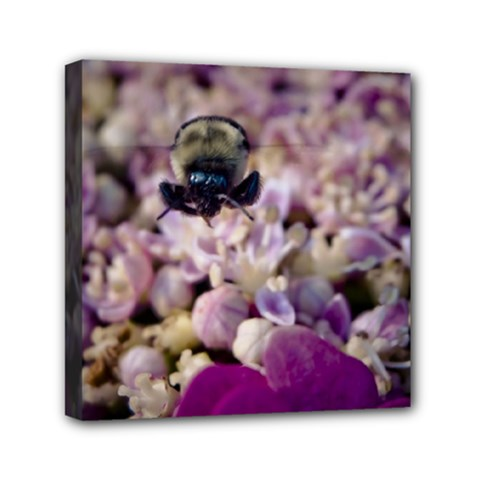 Flying Bumble Bee 6  x 6  Framed Canvas Print