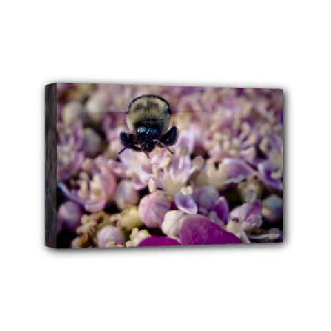 Flying Bumble Bee 4  x 6  Framed Canvas Print