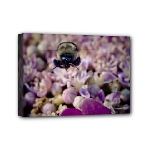 Flying Bumble Bee 5  X 7  Framed Canvas Print