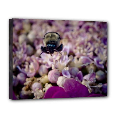 Flying Bumble Bee 11  x 14  Framed Canvas Print