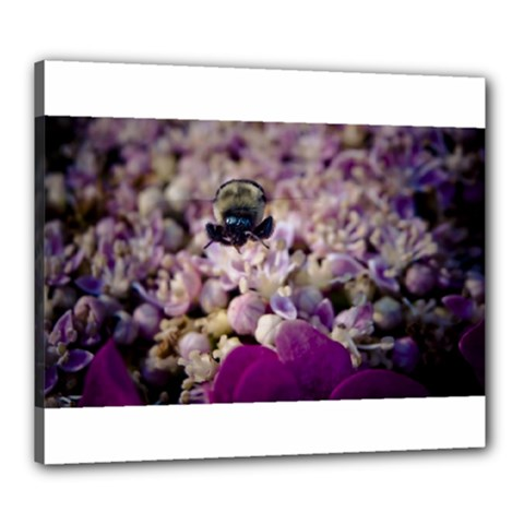 Flying Bumble Bee 20  x 24  Framed Canvas Print