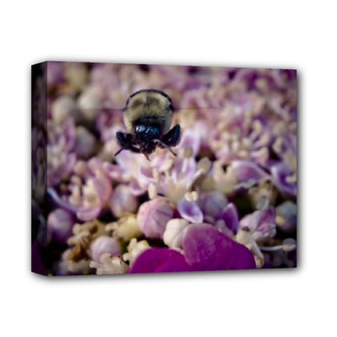 Flying Bumble Bee Deluxe Canvas 14  X 11  (stretched)