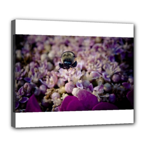 Flying Bumble Bee Deluxe Canvas 24  x 20  (Stretched)
