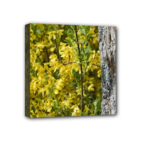 Yellow Bells 4  x 4  Framed Canvas Print