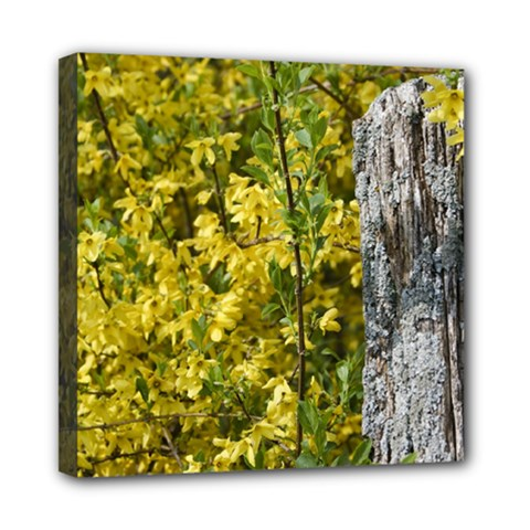 Yellow Bells 8  x 8  Framed Canvas Print