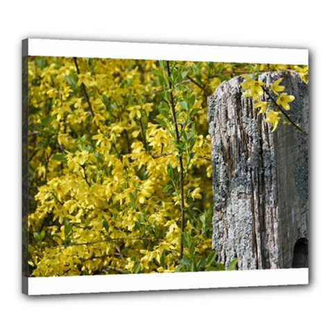 Yellow Bells 20  X 24  Framed Canvas Print