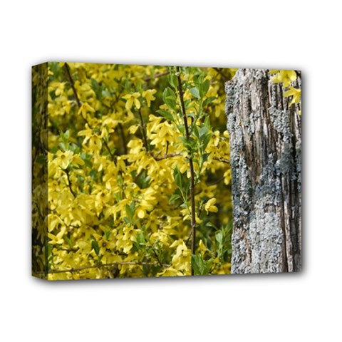 Yellow Bells Deluxe Canvas 14  X 11  (stretched)