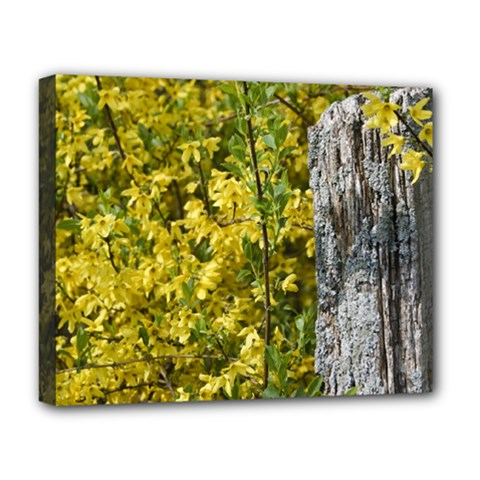 Yellow Bells Deluxe Canvas 20  x 16  (Stretched)