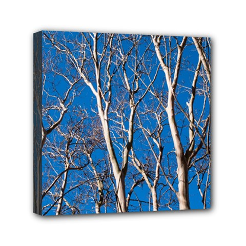 Trees On Blue Sky 6  X 6  Framed Canvas Print