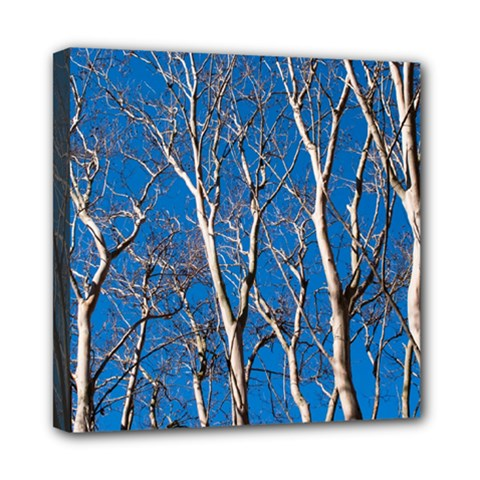 Trees on Blue Sky 8  x 8  Framed Canvas Print