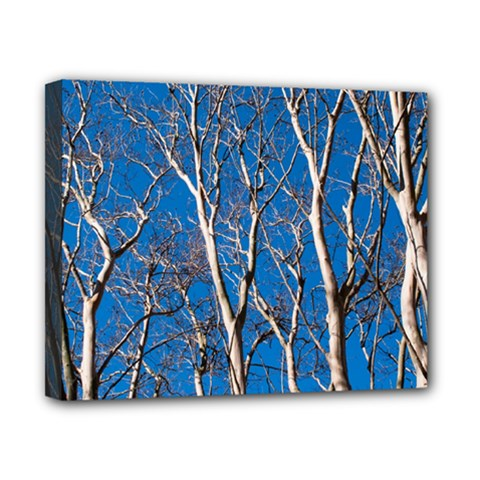 Trees on Blue Sky 8  x 10  Framed Canvas Print