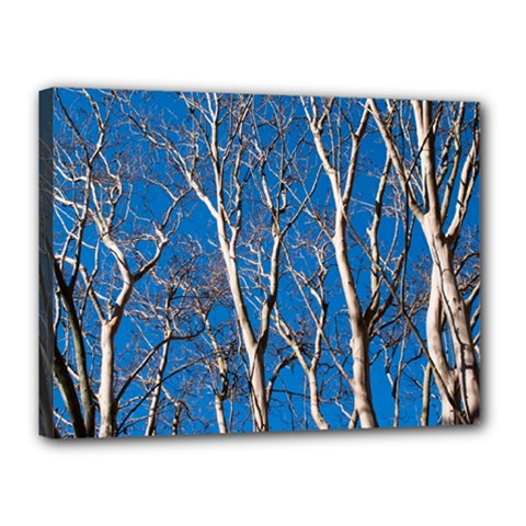 Trees On Blue Sky 12  X 16  Framed Canvas Print