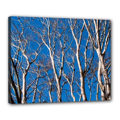 Trees on Blue Sky 16  x 20  Framed Canvas Print
