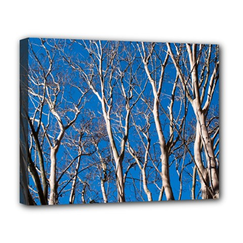Trees on Blue Sky Deluxe Canvas 20  x 16  (Stretched)