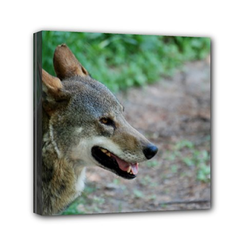 Red Wolf Mini Canvas 6  X 6  (framed)