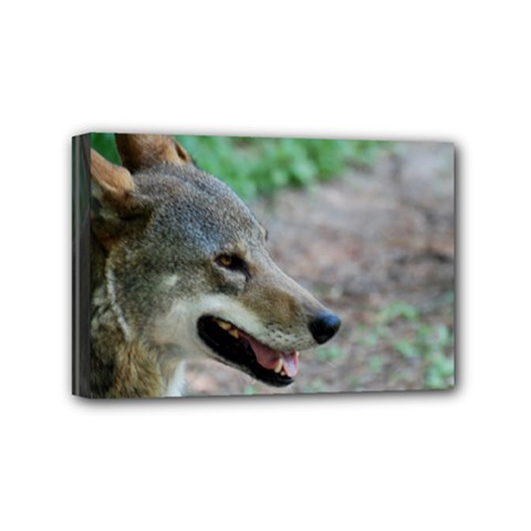 Red Wolf Mini Canvas 6  x 4  (Framed)