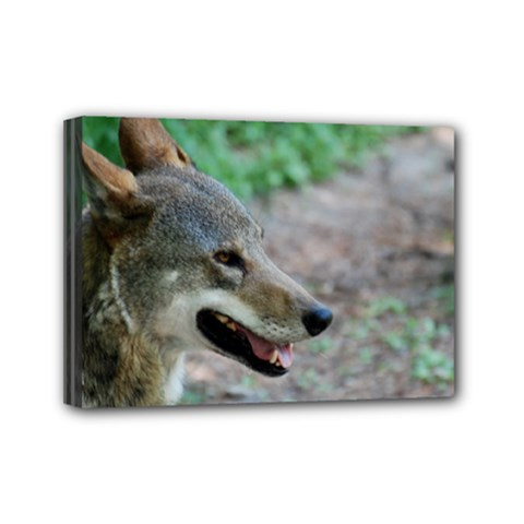 Red Wolf Mini Canvas 7  X 5  (framed)