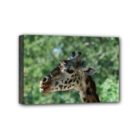 Cute Giraffe Mini Canvas 6  x 4  (Framed)