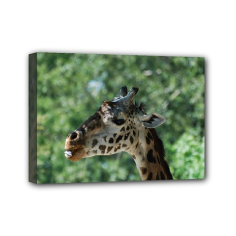 Cute Giraffe Mini Canvas 7  X 5  (framed)