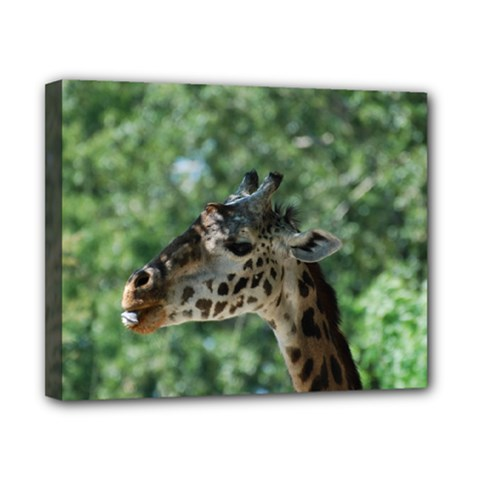 Cute Giraffe Canvas 10  x 8  (Framed)