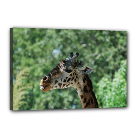 Cute Giraffe Canvas 18  x 12  (Framed)