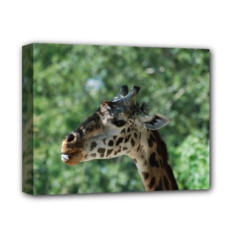 Cute Giraffe Deluxe Canvas 14  x 11  (Framed)