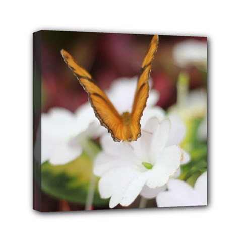 Butterfly 159 Mini Canvas 6  x 6  (Framed)