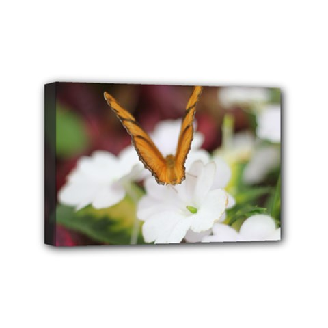 Butterfly 159 Mini Canvas 6  x 4  (Framed)
