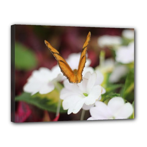 Butterfly 159 Canvas 16  X 12  (framed)