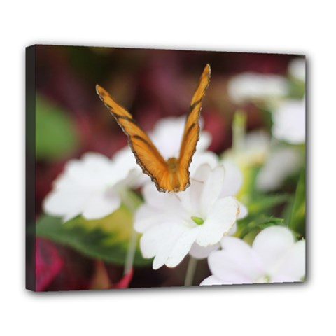 Butterfly 159 Deluxe Canvas 24  x 20  (Framed)