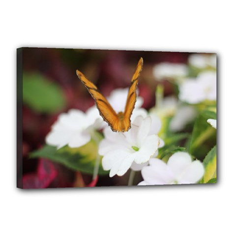 Butterfly 159 Canvas 18  x 12  (Framed)