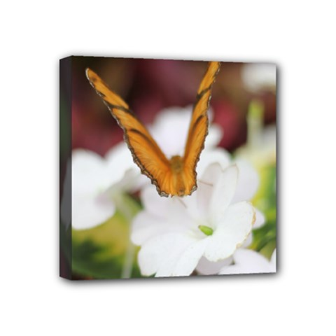 Butterfly 159 Mini Canvas 4  x 4  (Framed)