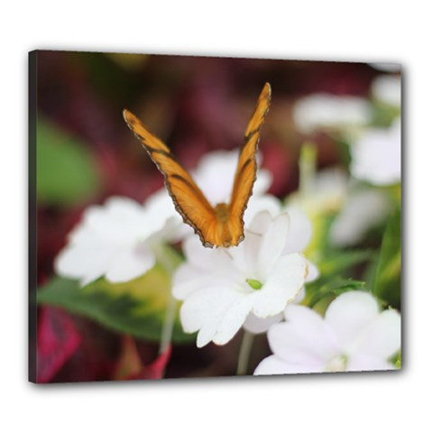 Butterfly 159 Canvas 24  X 20  (framed)