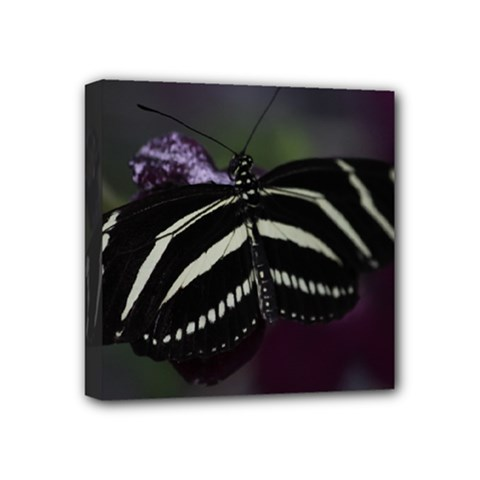 Butterfly 059 001 Mini Canvas 4  X 4  (framed)