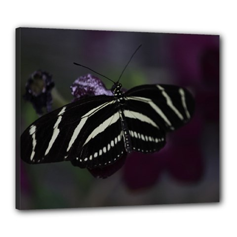 Butterfly 059 001 Canvas 24  x 20  (Framed)