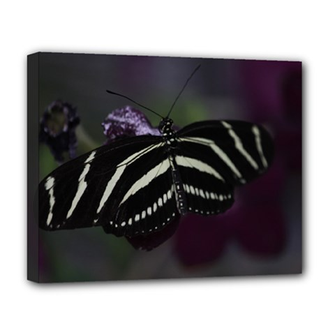Butterfly 059 001 Deluxe Canvas 20  x 16  (Framed)