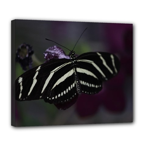 Butterfly 059 001 Deluxe Canvas 24  X 20  (framed)