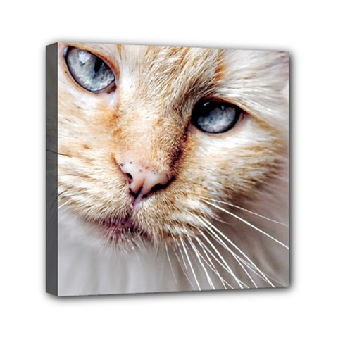 BLUE EYES Mini Canvas 6  x 6  (Framed)