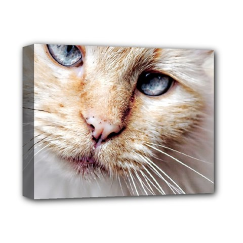Blue Eyes Deluxe Canvas 14  X 11  (framed)