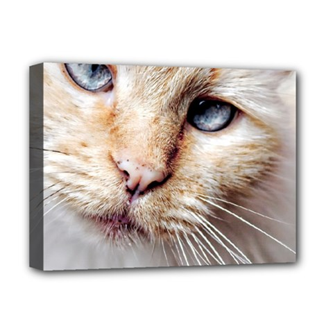 Blue Eyes Deluxe Canvas 16  X 12  (framed)
