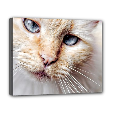 BLUE EYES Deluxe Canvas 20  x 16  (Framed)