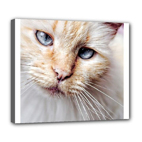 BLUE EYES Deluxe Canvas 24  x 20  (Framed)