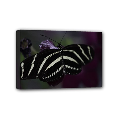 Butterfly 059 001 Mini Canvas 6  x 4  (Framed)