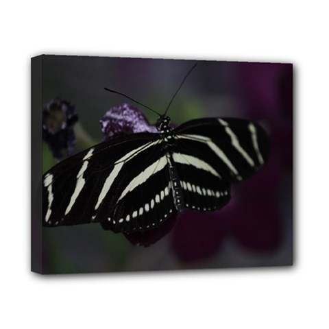 Butterfly 059 001 Canvas 10  X 8  (framed)