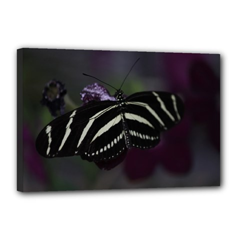 Butterfly 059 001 Canvas 18  x 12  (Framed)
